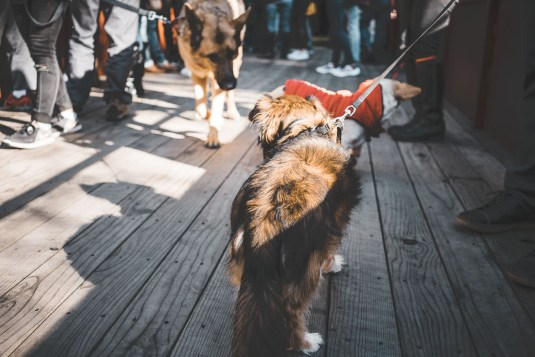 dog friendly Skunk train ride in Fort Bragg, Dog friendly things to do in Mendocino, pet friendly places in Fort Bragg and Mendocino