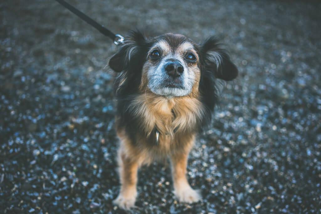 dog friendly glass beach in Mendocino, california