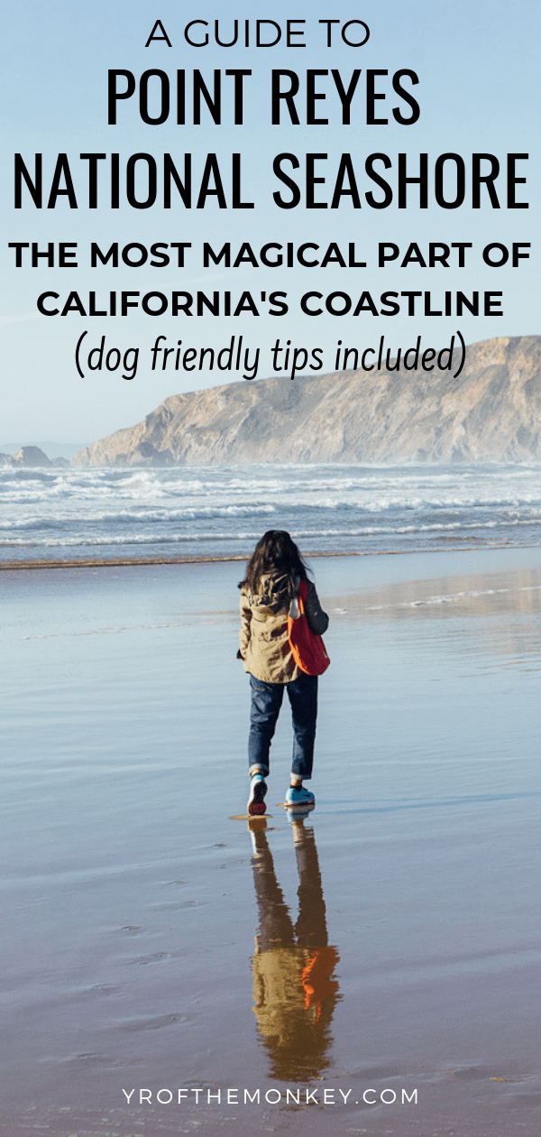 This is a guide to some of the best things to do in Point Reyes National Seashore which is an excellent weekend getaway from San Francisco to the most magical part of California's coast. Also includes dog friendly activities. Pin this to your California or USA board now ! #ptreyesnationalseashore #California #USA #America #WestCoast #Pacific