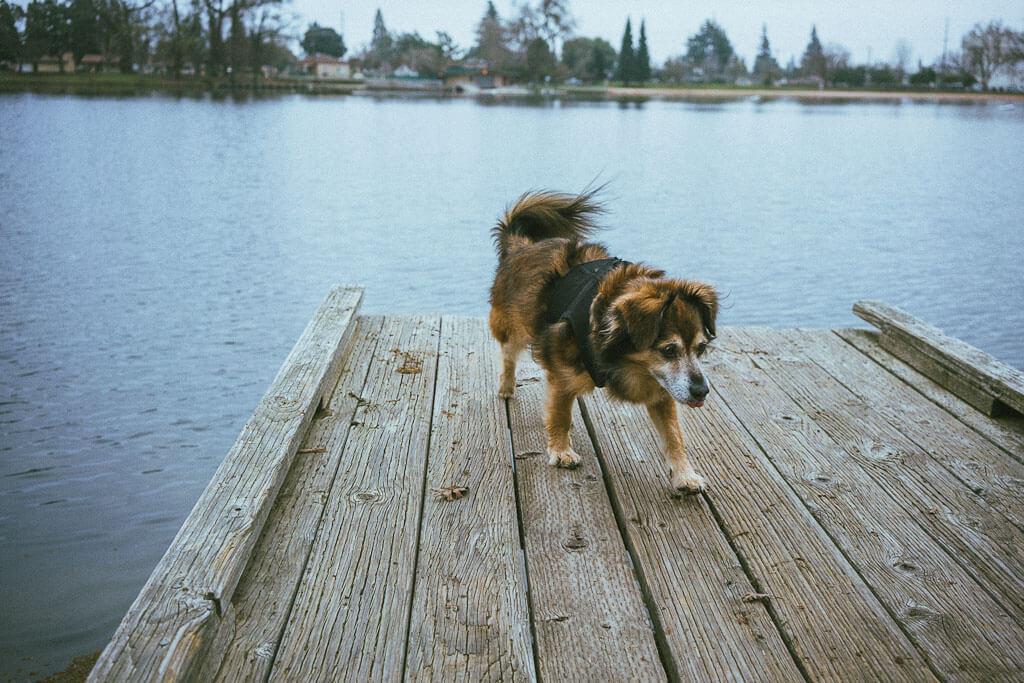 Dog Friendly Getaways In Northern California 5 Perfect Small Towns