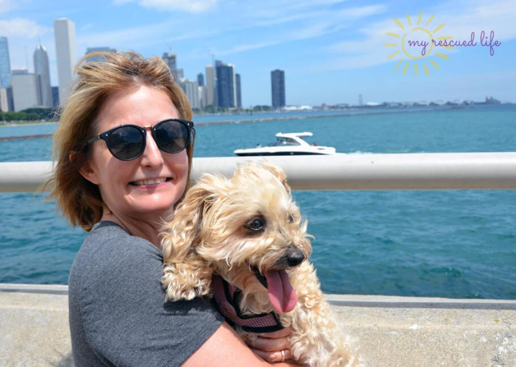 Most dog friendly cities in US, American cities that are dog friendly, dog friendly cities in USA, where to take your dog in USA, dog friendly Chicago