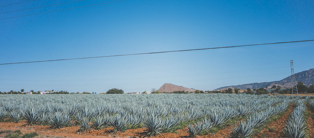 guadalajara to tequila, road trip to tequila, day trip to tequila, tequila tour, self guided tour of tequila, tequila tasting tour, tequila attractions, things to do in tequila mexico, what to see in tequila, agave fields