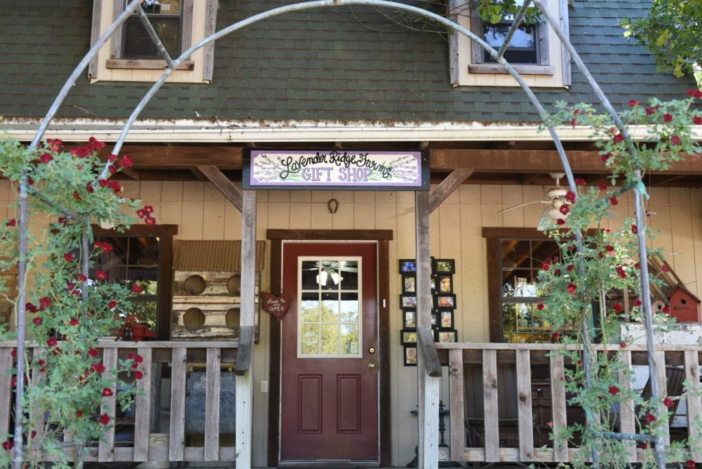 Lavender ridge farm, Gainsville, Texas. One of the most beautiful lavender fields in USA with a charming cafe
