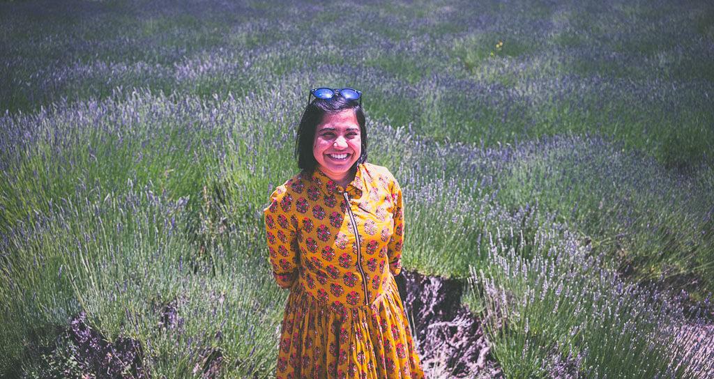 Lavender farm in USA, Matanzas Creek winery in Sonoma, California