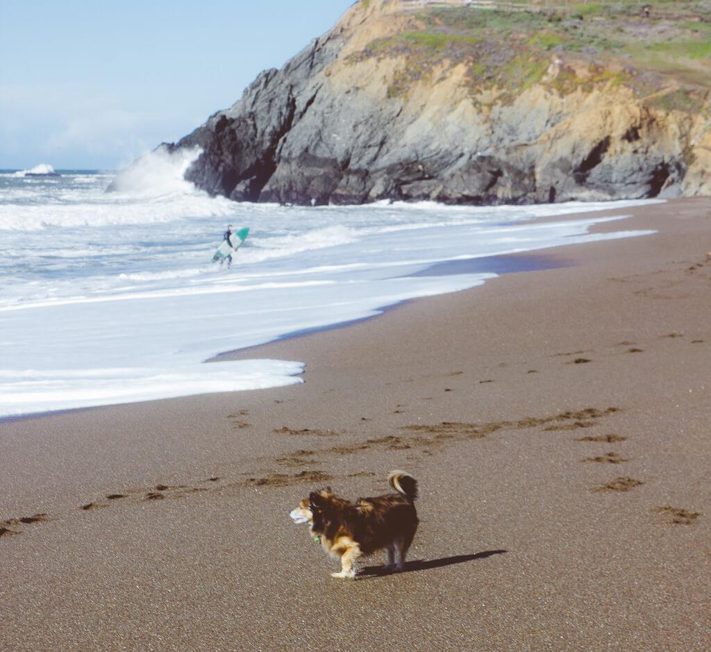 Rodeo beach is a dog friendly beach in Sausalito, California