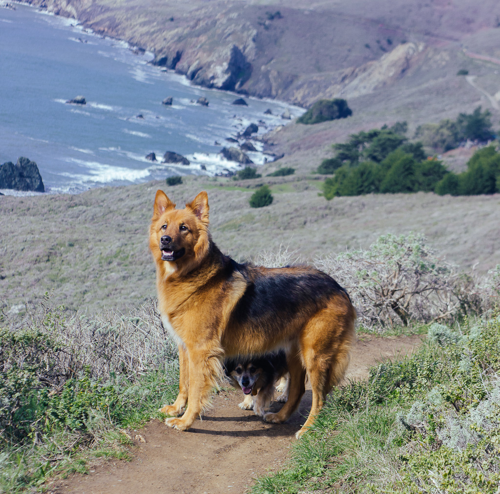Muir beach and lookout are one of the many dog friendly beaches in Northern California