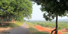 Rute bersepeda dengan 'hutan' kelapa sawit