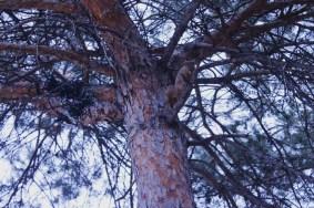A squirrel in an oak tree