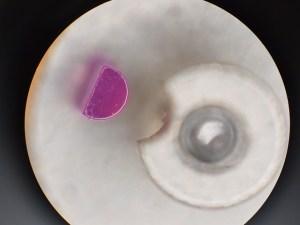 microscope10 pic
