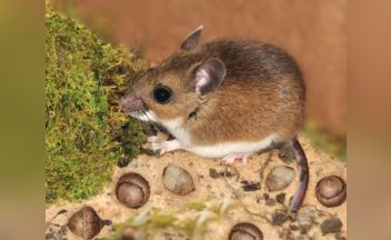 Hantavirus Remains Rare, but Potentially Deadly < Yale School of ...