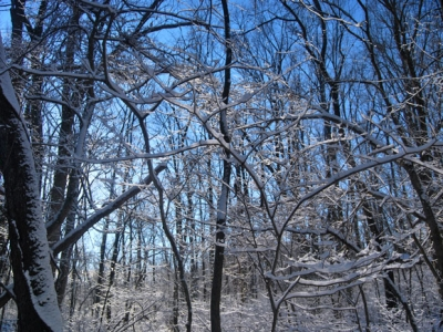 Aaron's Lens - More Snow