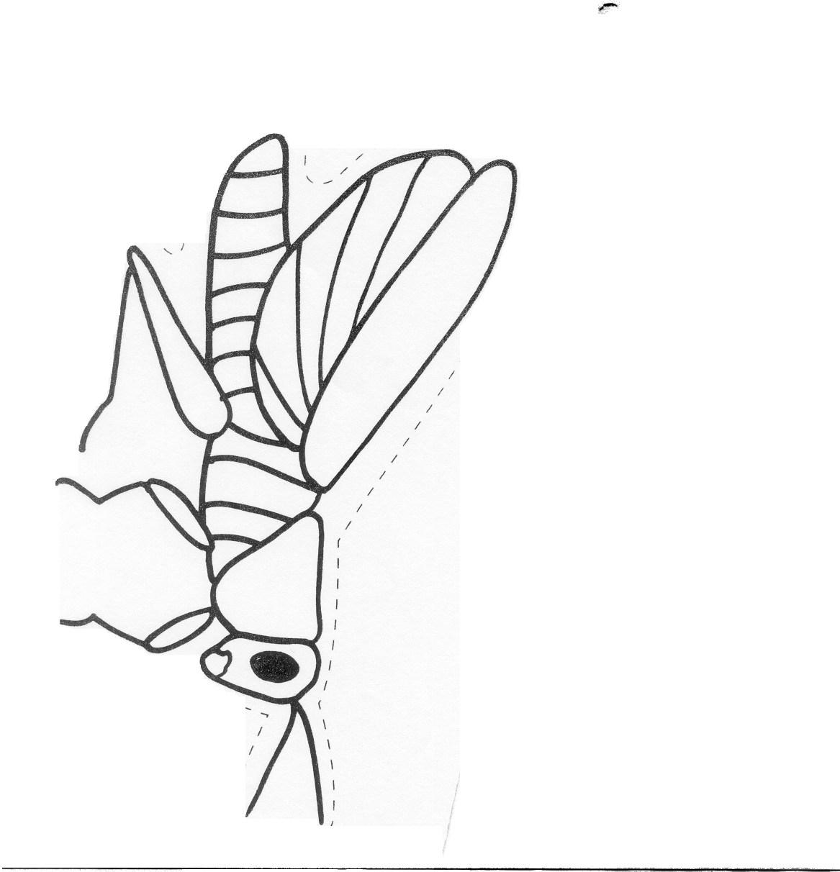 Public Library Program Ideas / Bugs