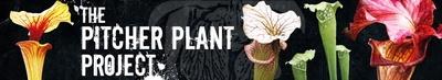 בלוג של מישהו מניו יורק, על גידול צמחים טורפים ומתמחה בכדניות ושופריות