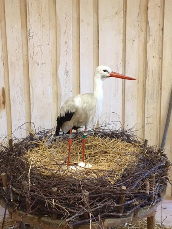 Stork-A