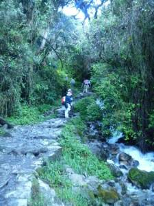 Inca Trail, forest, stream