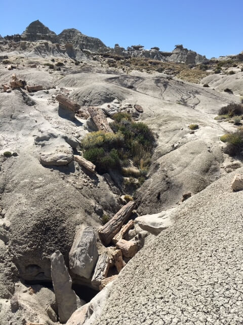 Petrified tree river bed