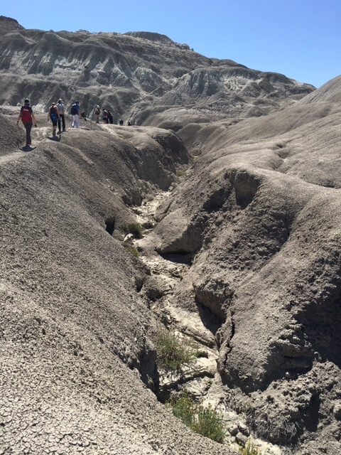 Trekking the Petrified Forest