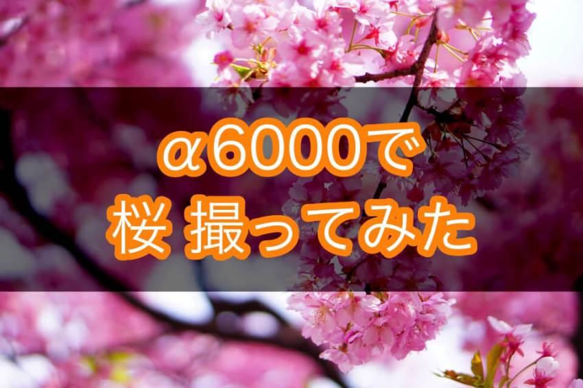 SONY α6000 (主に)単焦点レンズで桜をいろんな撮り方で撮ってみた