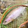 春?冬?の北海道のフライフィッシング『ワイルドレインボーを釣る!!』