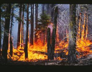 The low-to-moderate intensity surface fire in this prescribed burn will lower the fuel load in this forest in the Lake Tahoe Basin. Credit: Alan H. Taylor