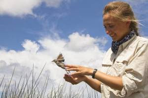 LSU graduate student Allison Snider conducts research on the Seaside Sparrows that reside in Louisiana marshes year-round. New research shows Deepwater Horizon oil in these native birds. Credit: Philip Stouffer, LSU School of Renewable Natural Resources