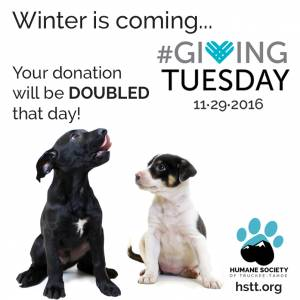 Mogul and his brother, Tele, and sister, KT, are lab mix puppies who will be adoptable on Giving Tuesday, Nov. 29.