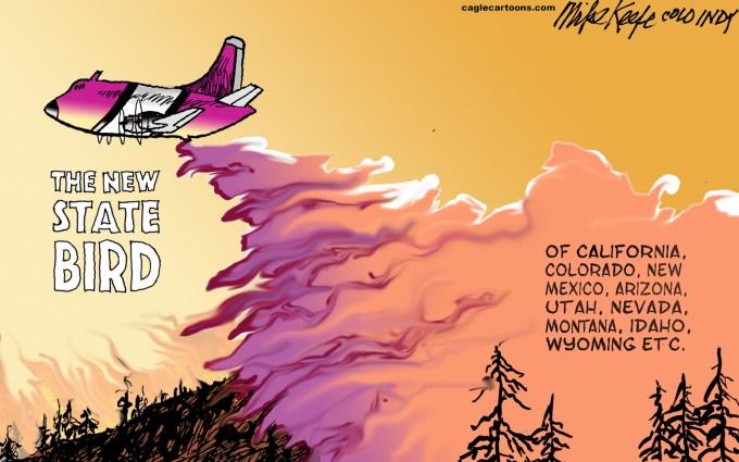 Image result for fire california cartoons