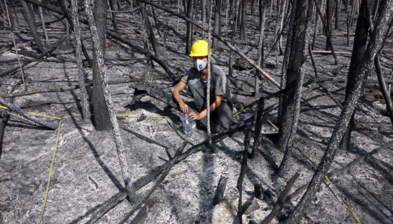 In samples from ten different fires, the researchers detected EPFR in concentrations that exceeded those typically found in soils by as much as ten to a thousand times. (© Stefan Doerr)