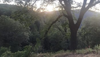 An oak tree near YubaNet HQ dropped this large limb yesterday evening.
