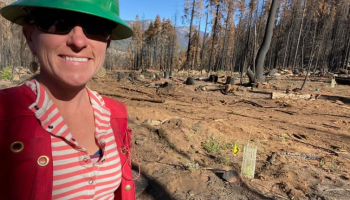 AMEX Principle Investigator Sarah Bisbing checking survival at CAL FIRE's Mountain Home Demonstration State Forest reforestation trial site, which was planted within the burn scar of the 2020 Castle Fire.