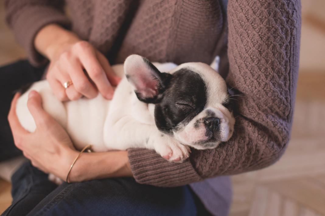 cachorro en brazos de una persona