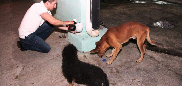 Miles de yucatecos pierden el amor por sus perros y los abandonan en la  calle – Yucatan Ahora