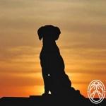 Maya Fable: The Loyal Dog