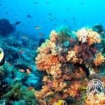 Alacranes Reef