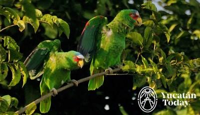 parrot-2