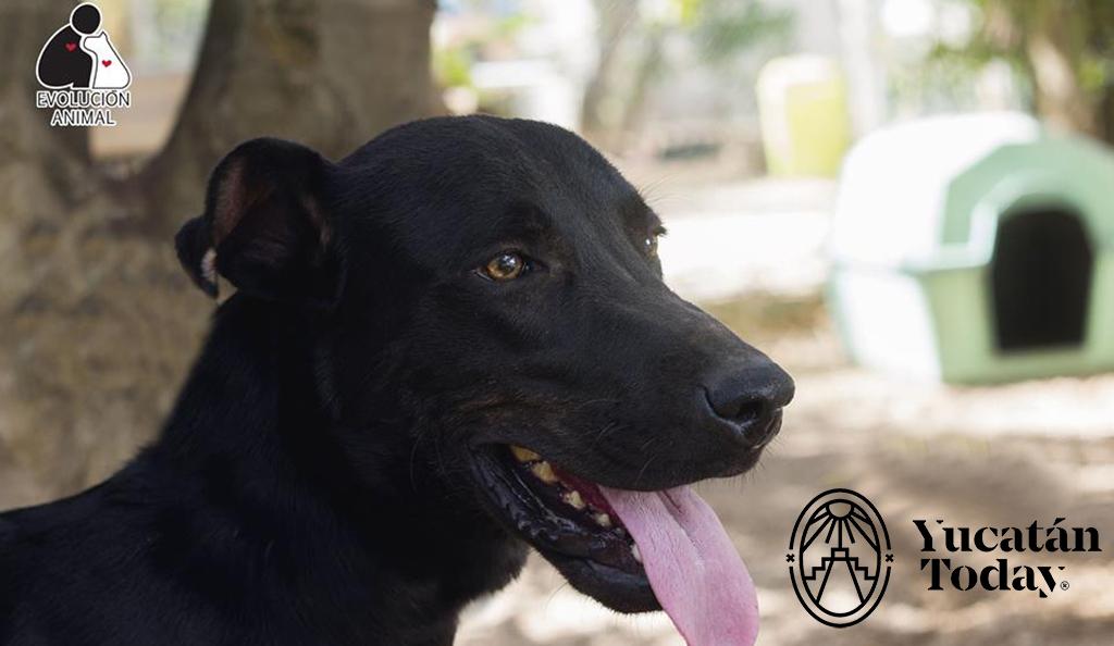 Adopción de Mascota de la Semana