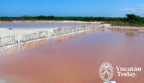 Xcambo Laguna rosada