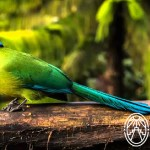 Birdwatchers en Yucatán: Festival de las Aves Toh