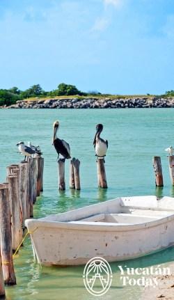 Playa Pelicanos