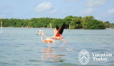 Flamingo-Rio-lagartos-1