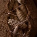Cultura alimentaria en el Puuc: el movimiento original de la granja a la mesa