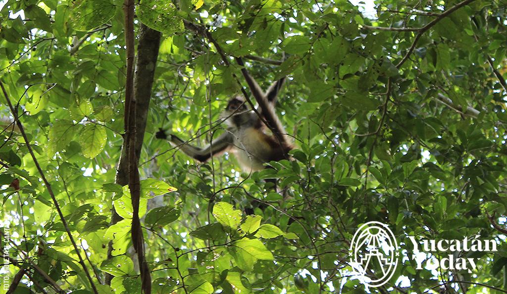 Punta Laguna, el Santuario de los Monos