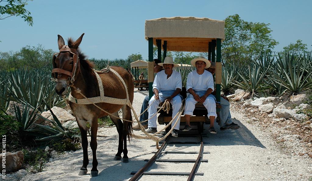 Yucatán Top 10: December 2019