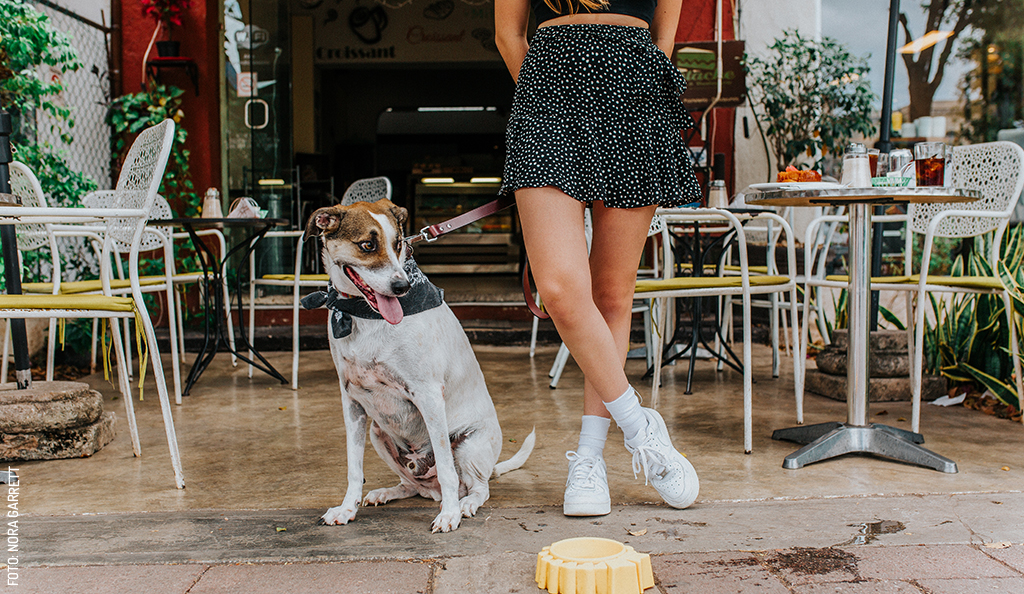 Cafés Pet-Friendly en Mérida