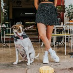 Pet-Friendly Cafés in Mérida