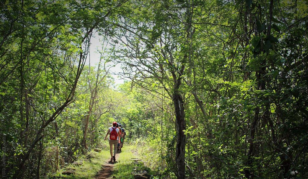 El Viaje es el Camino – Camino del Mayab