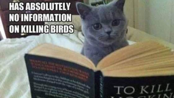 Cat said, This book has no information on killing Mocking Birds