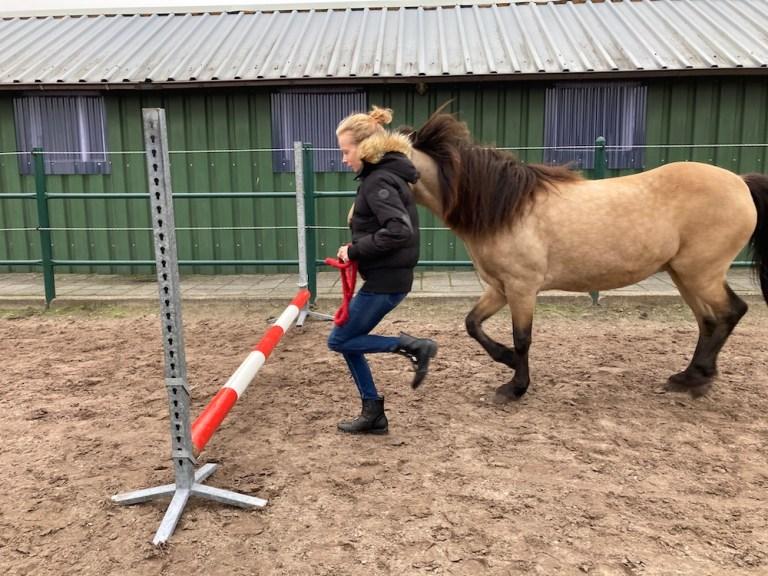 Zorgstal therapie met paarden voor jongeren