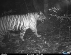 Hantu harimau 5