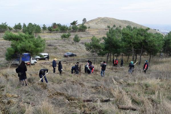 Посадка леса в Дагестане